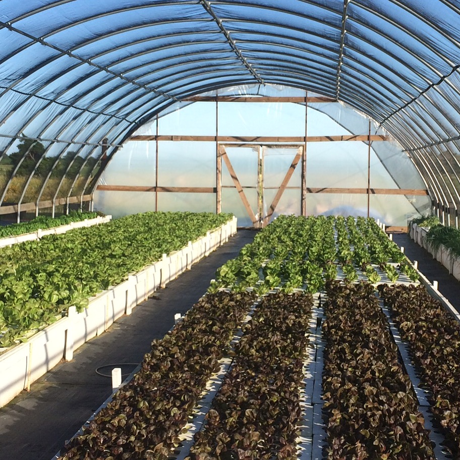 Aquaponic Farms Texas