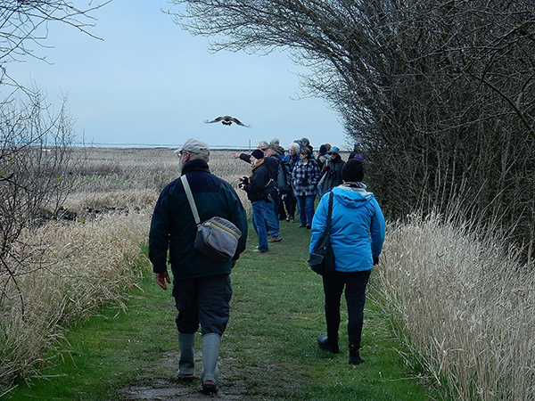 Birders enjoy the birds at the Reifel Migratory Bird Sanctuary in Delta, BC