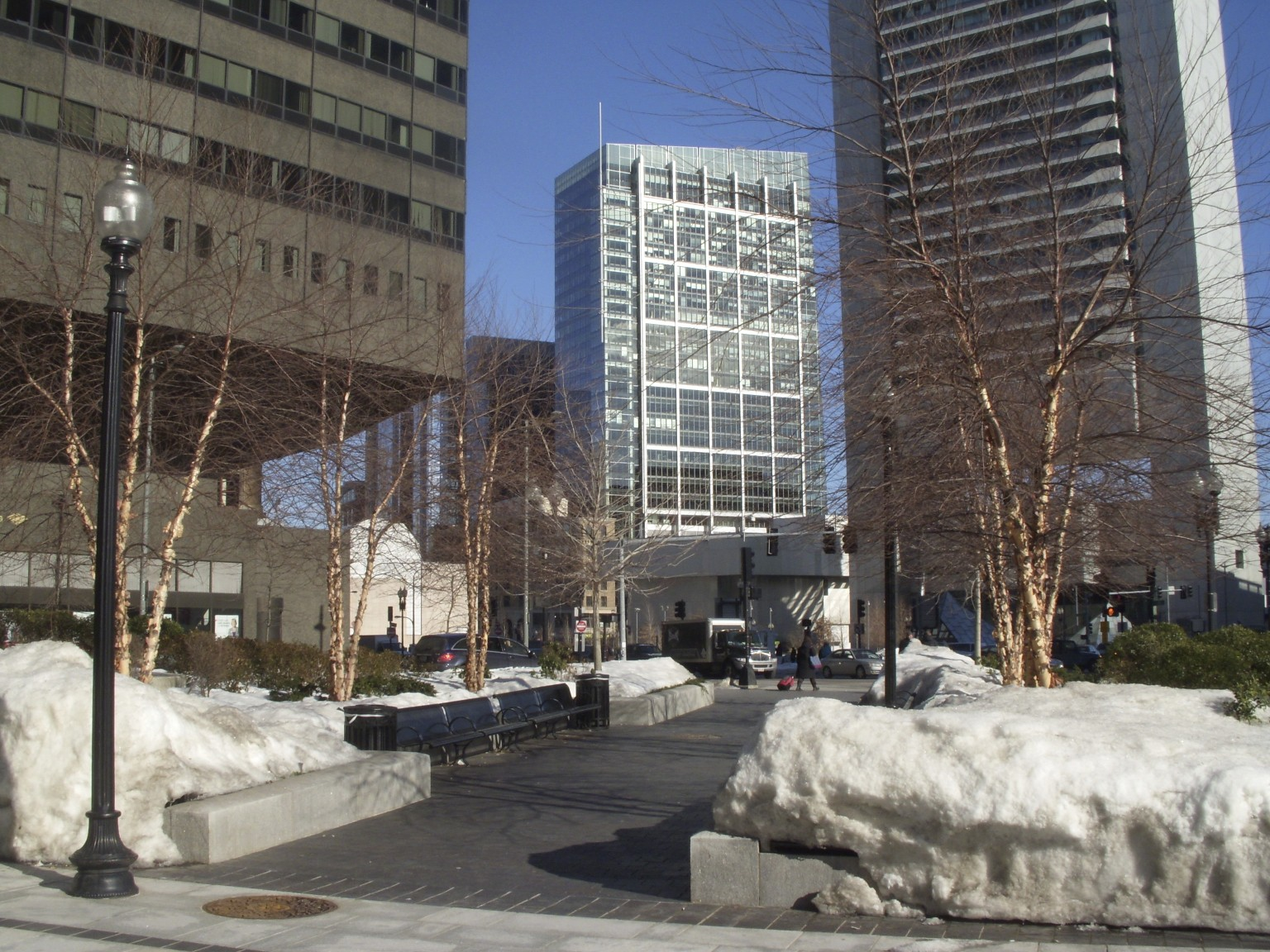 picture of Birch trees growing in Boston's Big Dig open space setting