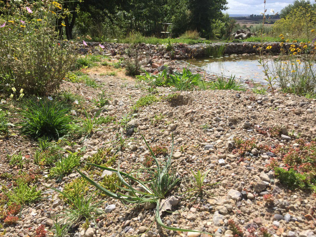 Crushed concrete and water for bugs and plants