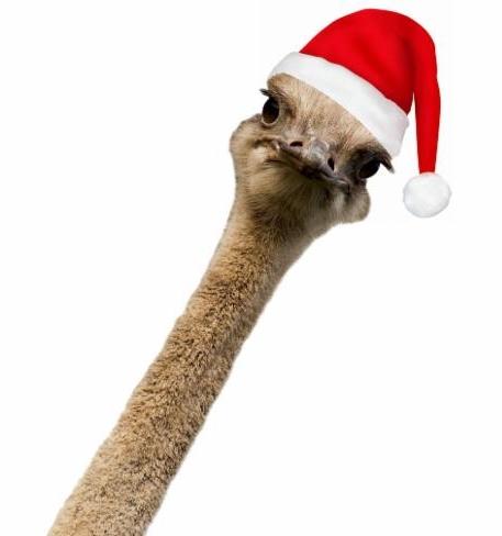 ABEX Ostrich with Santa Claus Hat