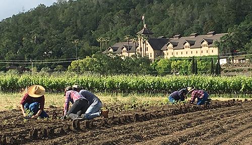 Students on Farm