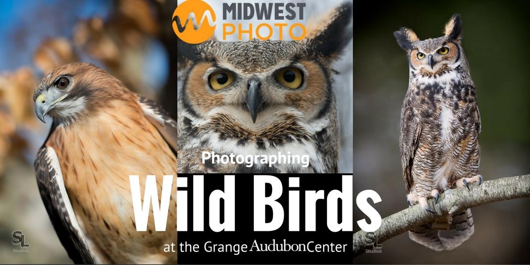 Wild Birds Oct 2016