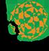 Irish Studies Logo