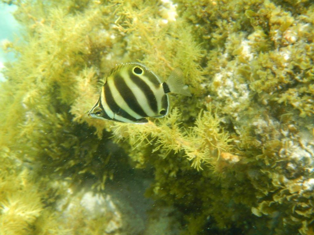 Underwater fish image