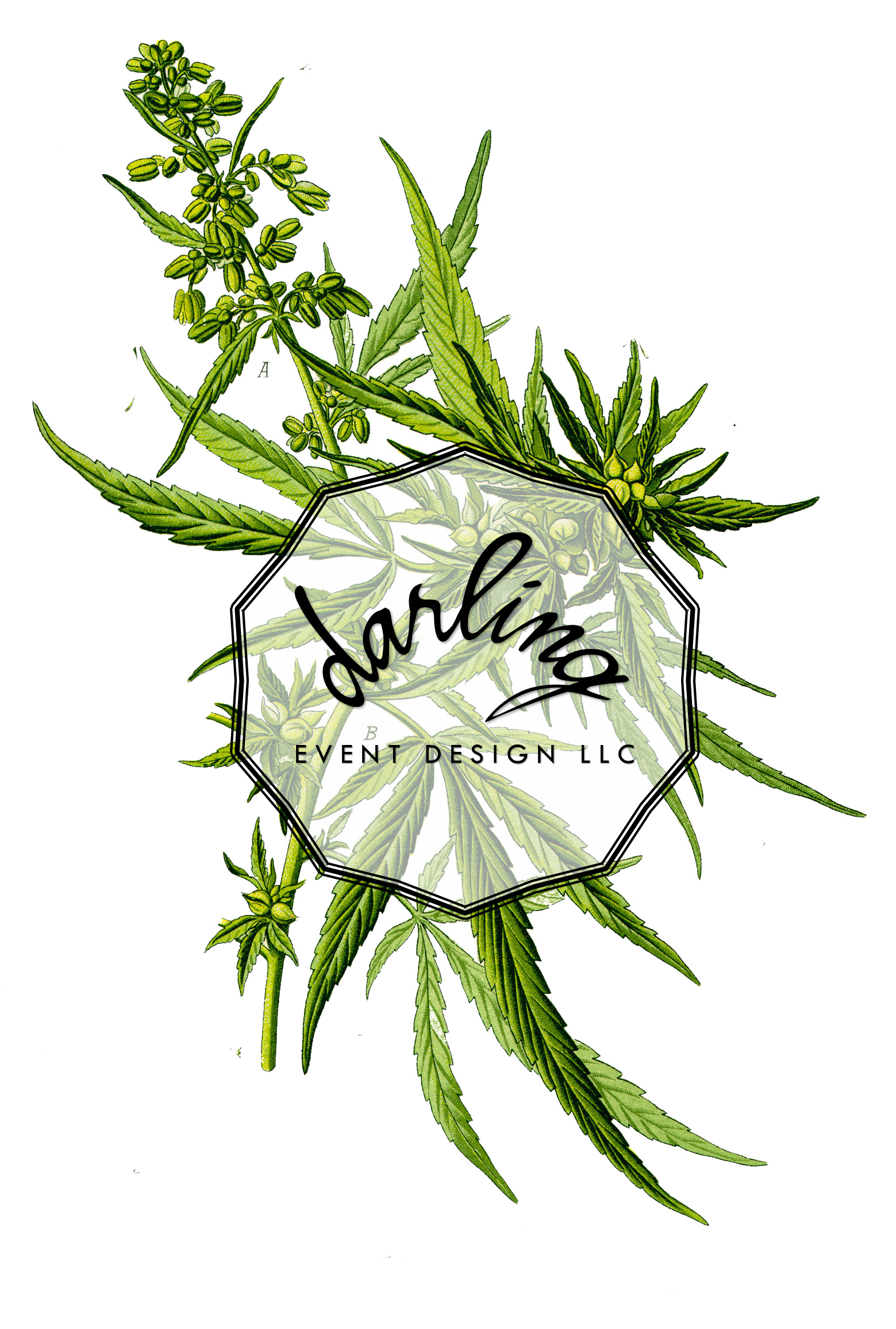 Darling Cannabis Seminar