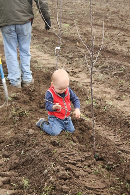 Spring bloom fruit tree sale orchard tour planting pruning workshop tickets multiple dates - Spring trimming orchard trees healthy ...
