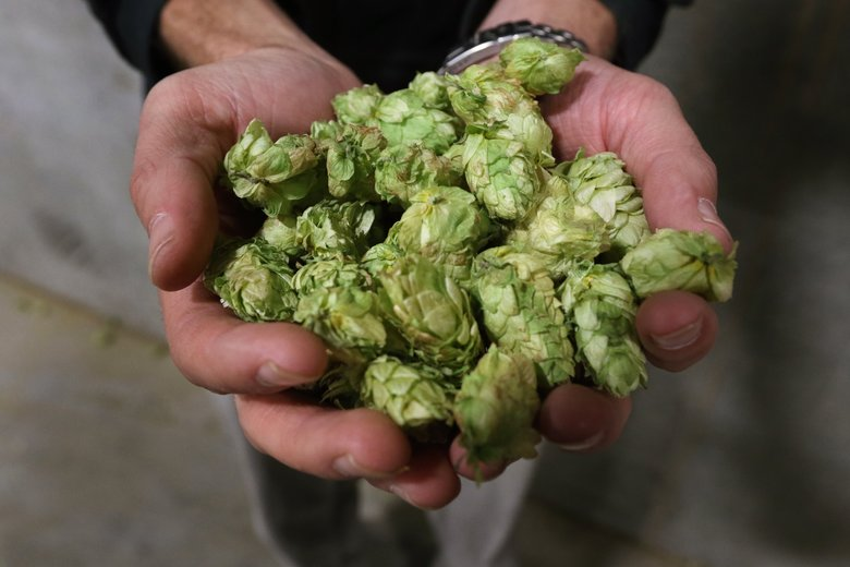 Hops, Brewery Tour
