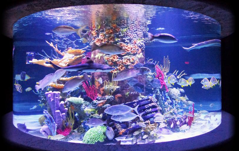 Living Color Aquariums is Also