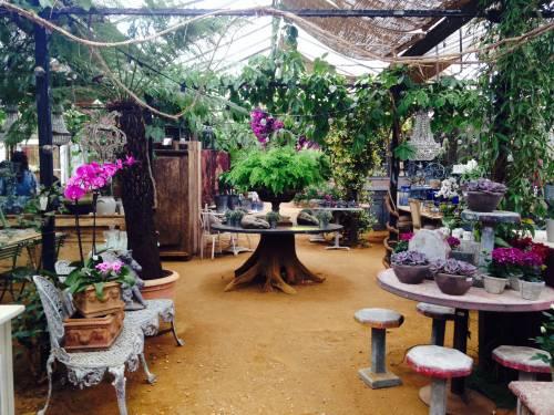 Petersham Nurseries Advaya Initiative Wild
