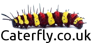 Caterfly