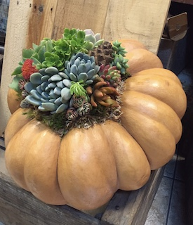 Succulents Are For Sharing / Succulent Pumpkin