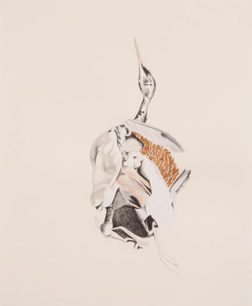 Andre Yi - Dead Bird Study #1