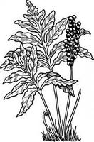 Adult Ecology: Plant ID Series - Explore the Ferns of...