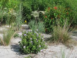 Brooker Creek Preserve Environmental Education Center - Pinellas County Extension