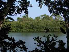 Weedon Island Preserve Cultural and Natural History Center - Pinellas County Extension