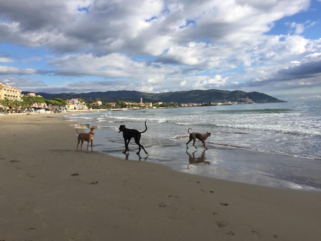 Windhunde am Strand von Diano Marina