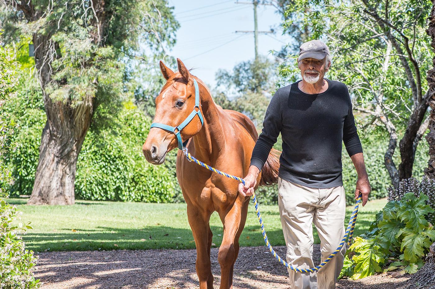 man leads horse
