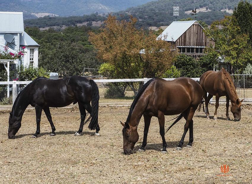 horses  eating in paddock