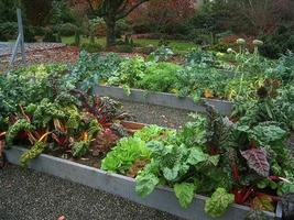 Start Your Fall Organic Vegetable Garden