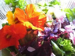 Salad Gardening with Herbs and Edible Flowers