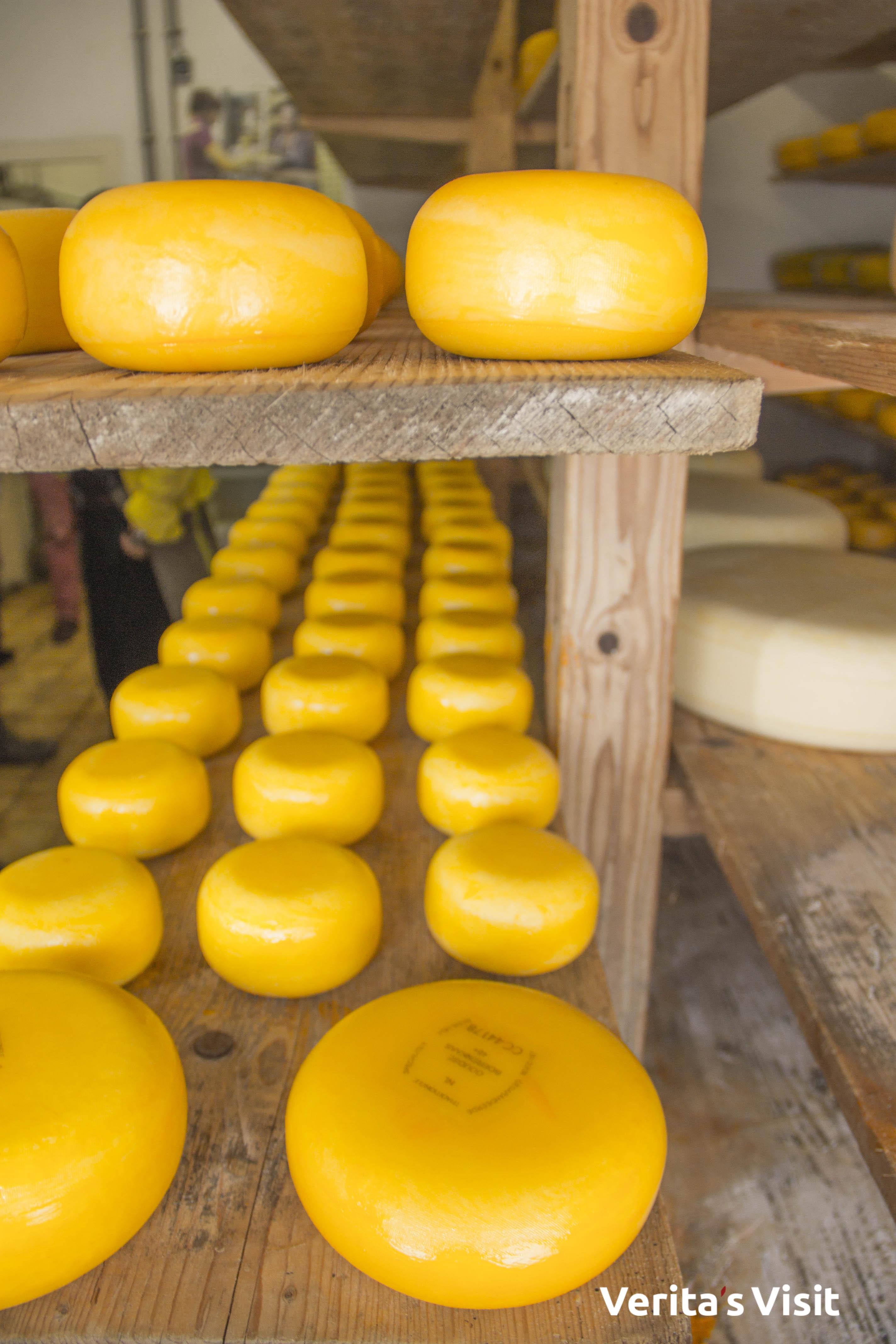Leiden cheese & Gouda cheese