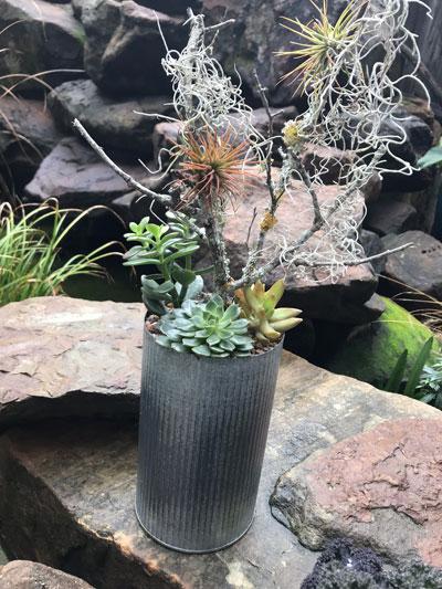 succulents-airplants