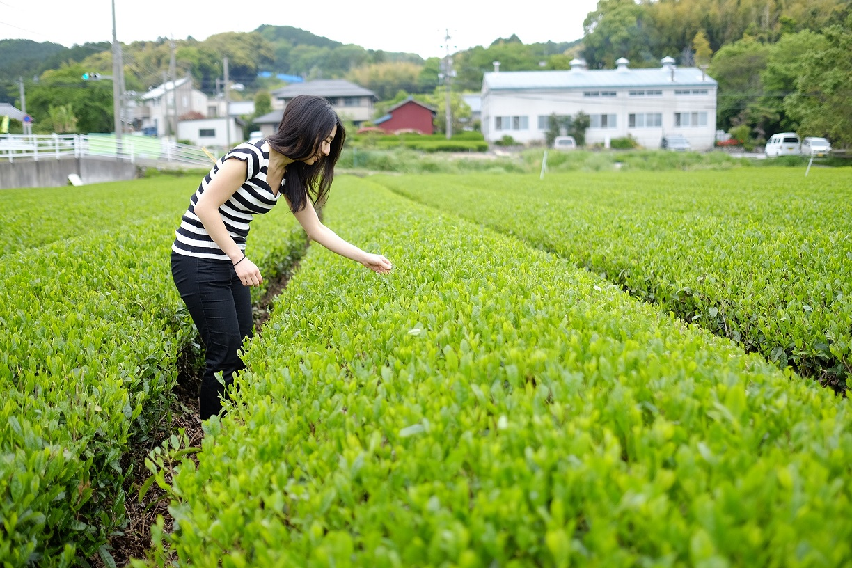 Our collection of green tea comes directly from Shizuoka.