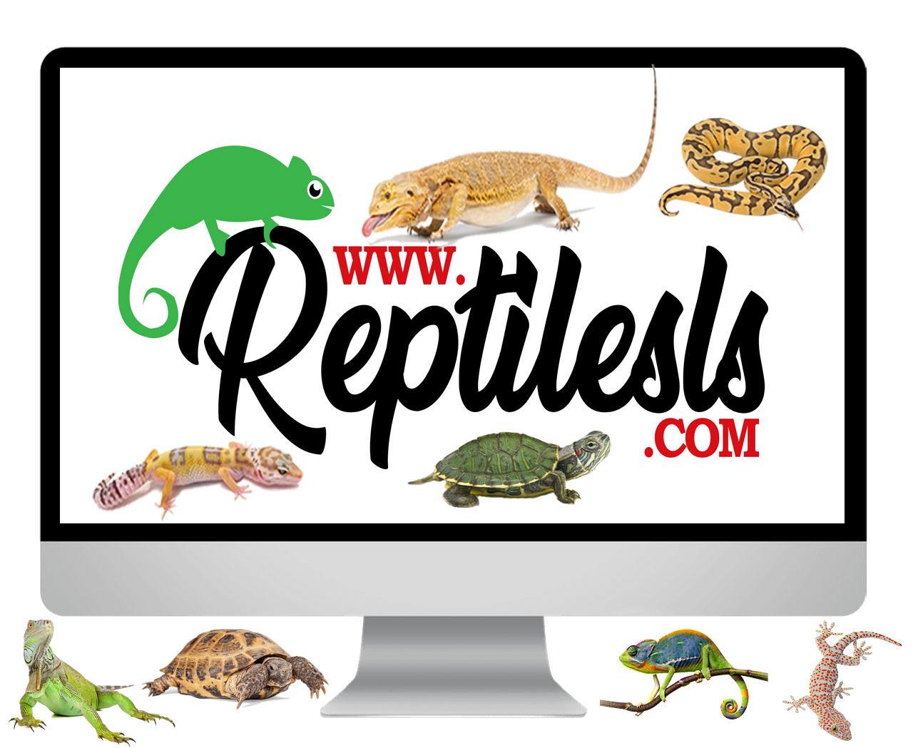 Grand Rapids Reptile Expo - Mariagegironde