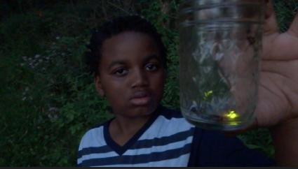 firefly boy