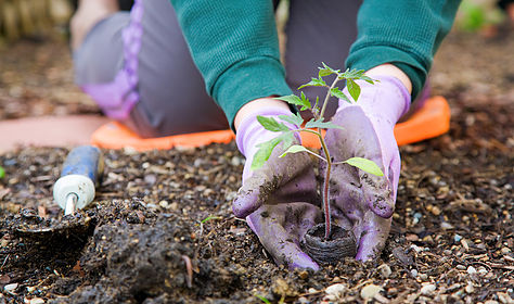 Starting Your Own Veggie Patch