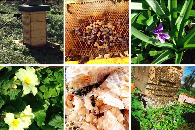 Brookfield farm Bees & Honey