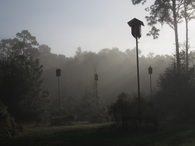Bat Houses at Chinsegut Conservation Center Photo by Betty Ann Kolar