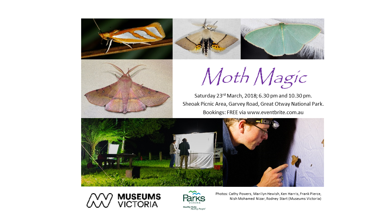 Poster with details of Museums Victoria's moth-spotting evening in the Otways