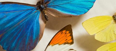 Kids Seeking Science Workshops - Butterflies