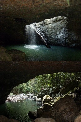 Springbrook National Park rainforest