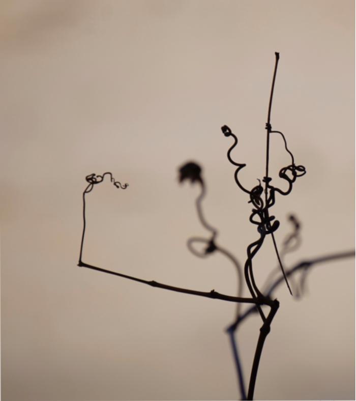dancing twig