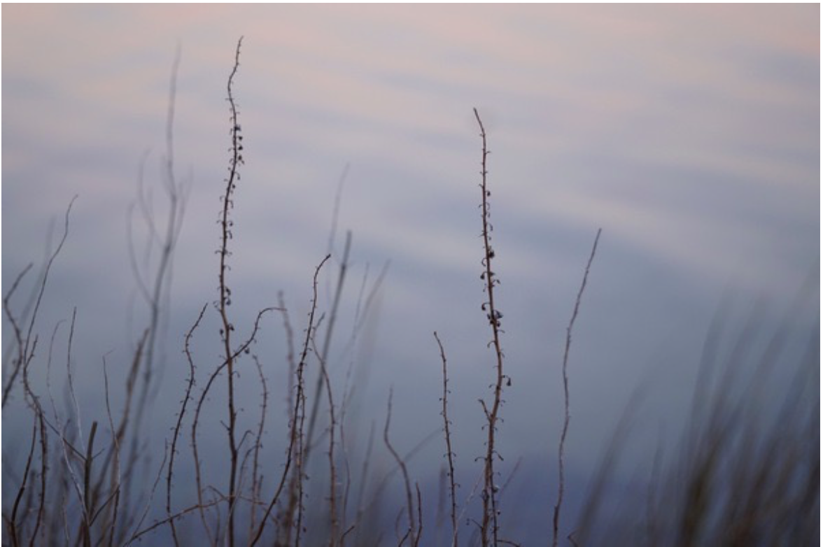 abstract twigs