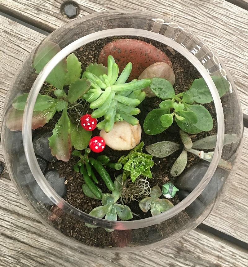 sydney succulent terrarium