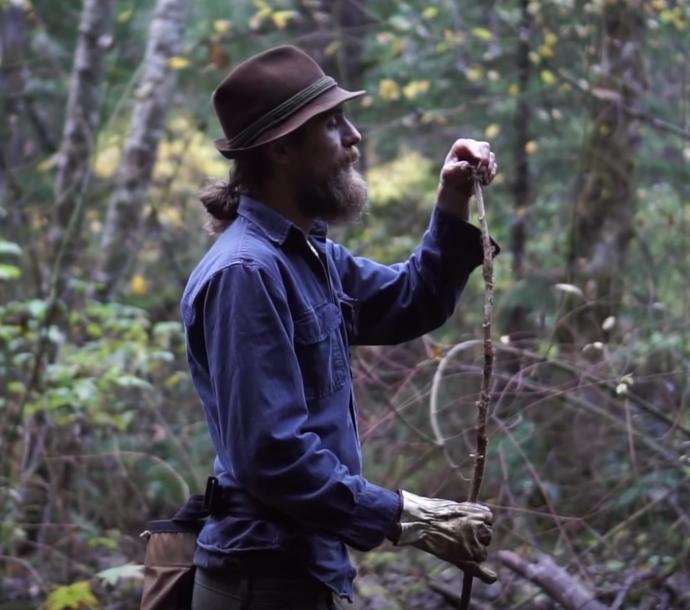 Herbalist Yarrow Willard
