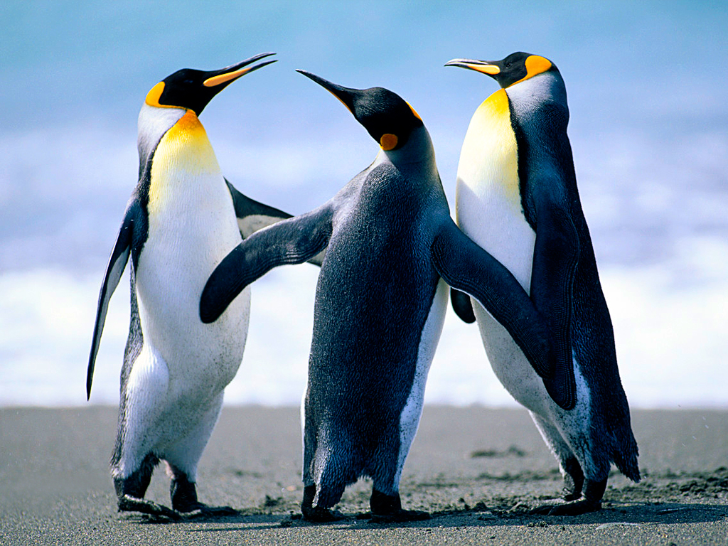 Penguins -- Communication