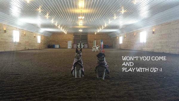 Photo of barn dogs