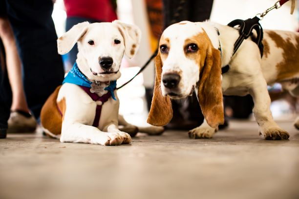 cute pups