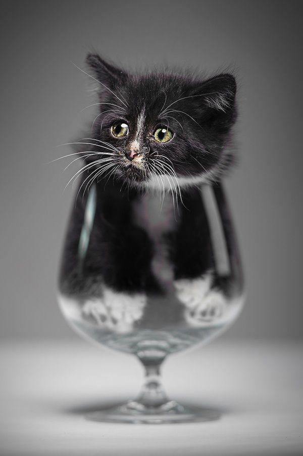 A kitten in a wine glass.
