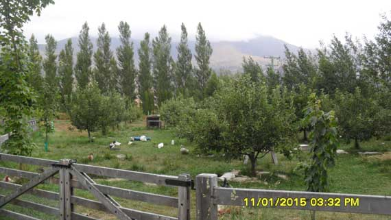 Arrowtown Orchard