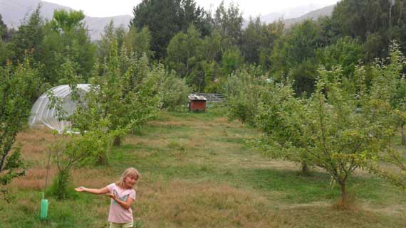 Arrowtown Orchard 2