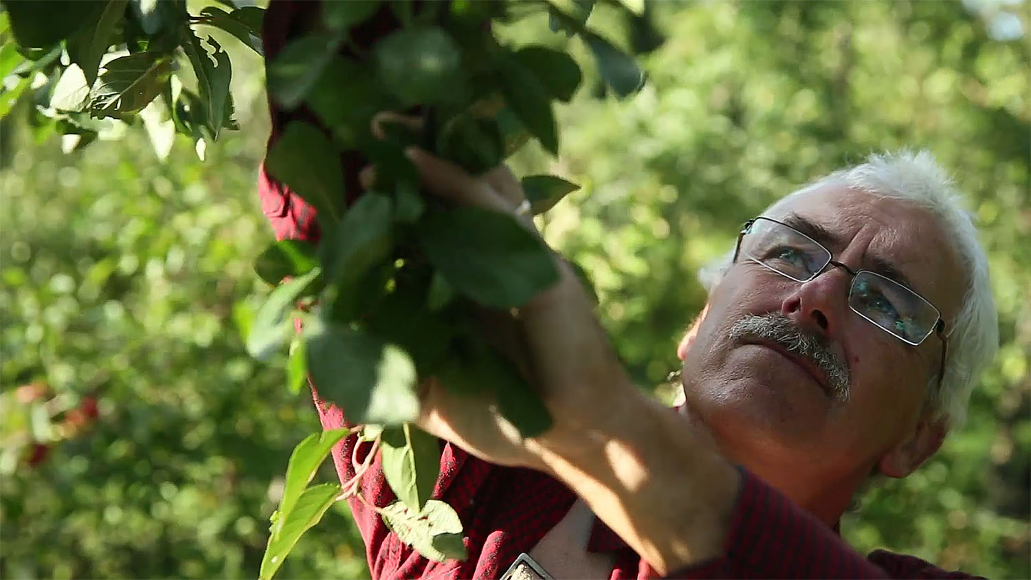 Stefan at home in his orchard