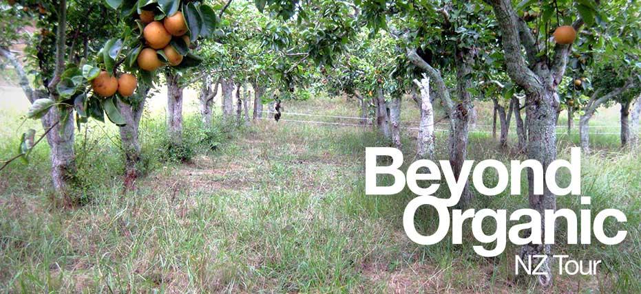 Nashi Orchard