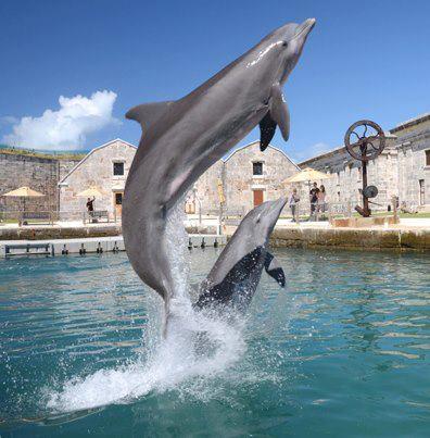 LocationPhotoDirectLink-g562685-d149863-i120258647-Dolphin_Quest-Sandys_Parish_Bermuda.html.jpg
