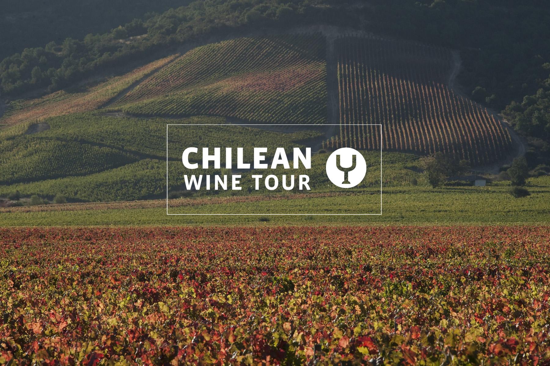 Chilean Wine Tour